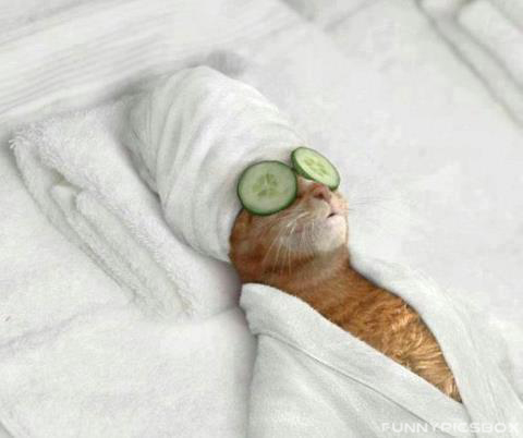 Funny-Cat-at-Beautiparlour Top 24 Funny And Laughable Animals