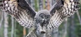 Learn More And Find Out About What Makes Owls Unique