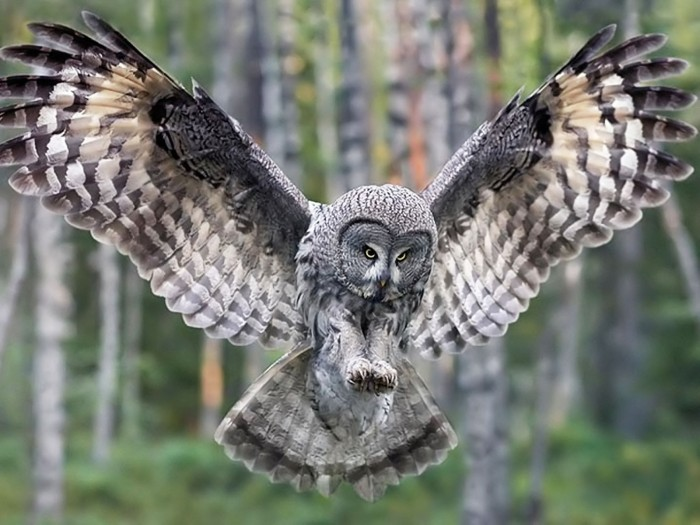 Owl6 Learn More And Find Out About What Makes Owls Unique