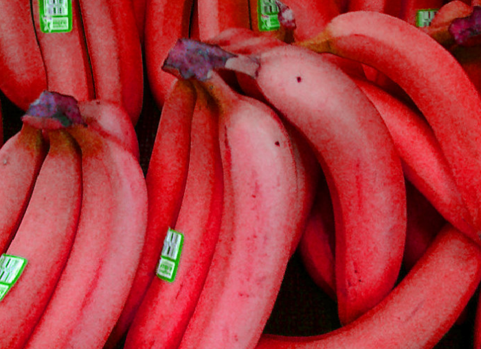 Vtnel Have You Ever Tried Eating Red Bananas?