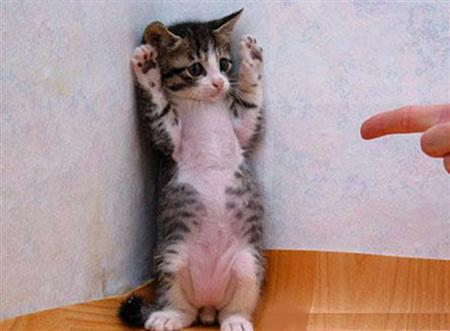a.aaa-Cute-funny-animals Top 24 Funny And Laughable Animals