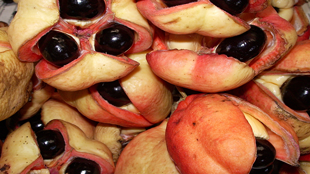 ackee 23 Weird Fruits Which You Probably Have Never Eaten Before, But Should