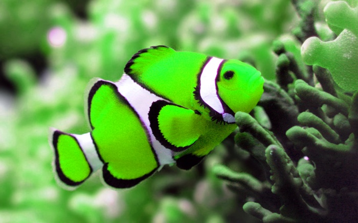 amazing-colorful-fish-wallpaper-hd-backgrounds1 Top 24 Unique Colorful Creatures Around The World
