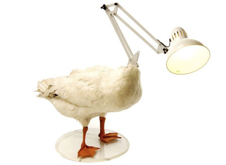 bb496_dead-duck-lamp 30 Most Unusual Furniture Designs For Your Home