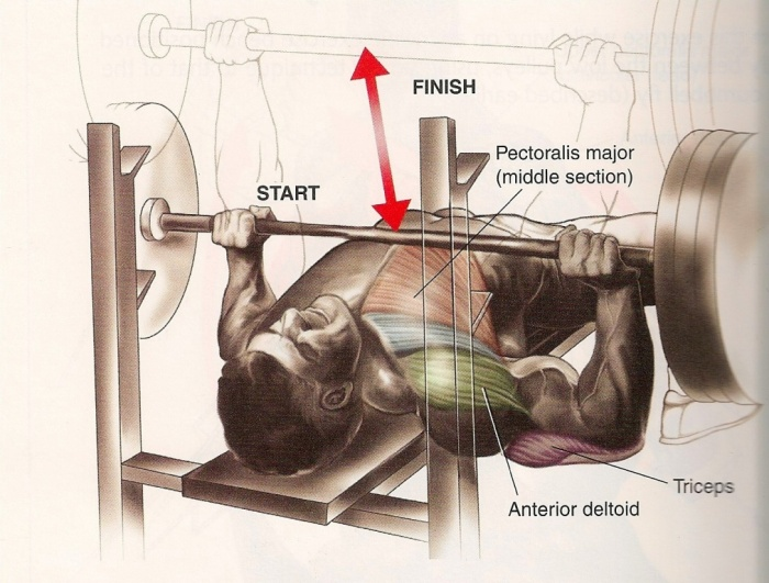bench-press-hamiliton2 10 MMA Workouts to Achieve Fitness