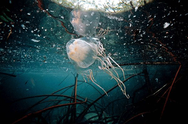 boxjellyfish-1 Top 25 Most Dangerous Animals In The World