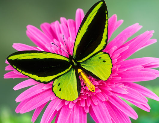 butterfly-pictures-1 Top 24 Unique Colorful Creatures Around The World