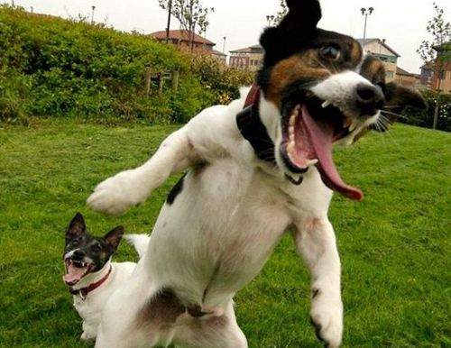 crazydog1 19 Animals Making Funny Faces
