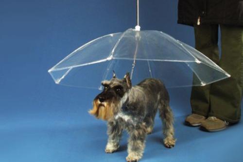 dogbrella 18 Insanely Unique Umbrellas
