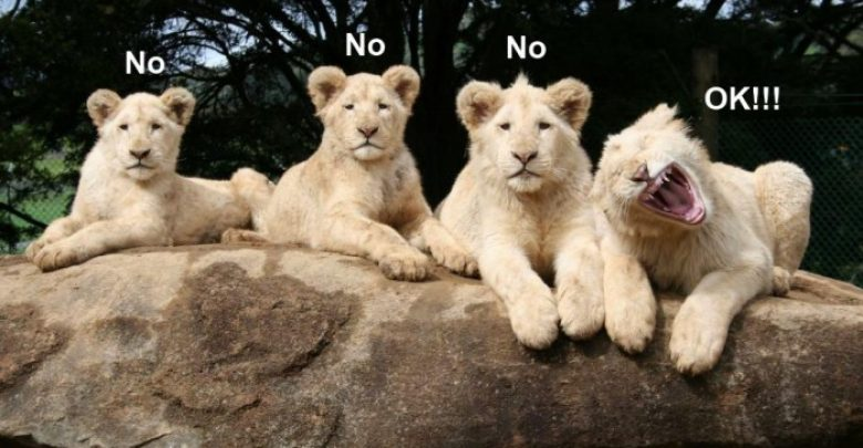 Photo of Top 24 Funny And Laughable Animals
