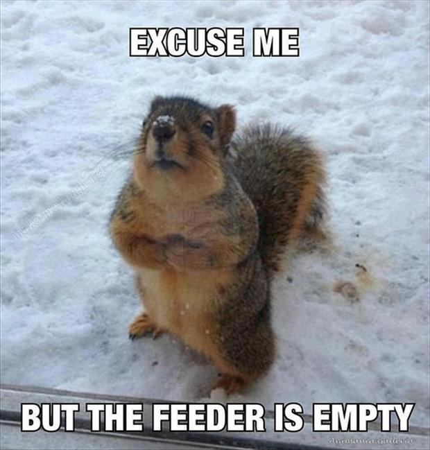 funny-animals-squirrels1 Top 24 Funny And Laughable Animals