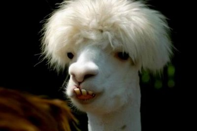 funny-looking-animals-pictures-3 Top 24 Funny And Laughable Animals