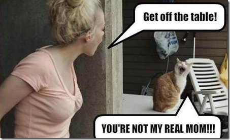 funny-pictures-cat-and-human-argue6 Top 24 Funny And Laughable Animals