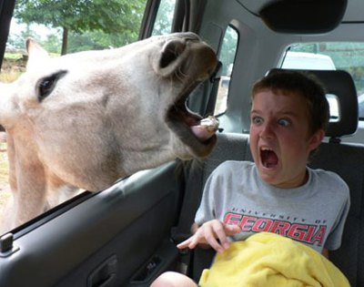 kid-loves-animals Top 24 Funny And Laughable Animals