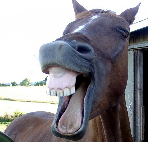 laughinghorse1 19 Animals Making Funny Faces