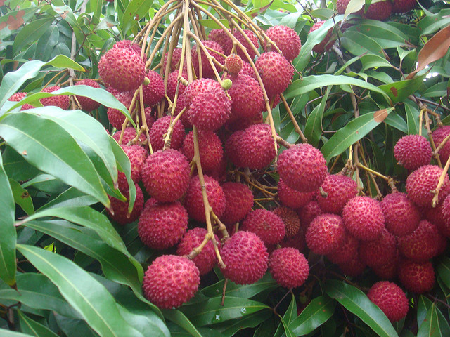lychee 19 Weird Fruits From Asia, Maybe You Have Never Heard Of