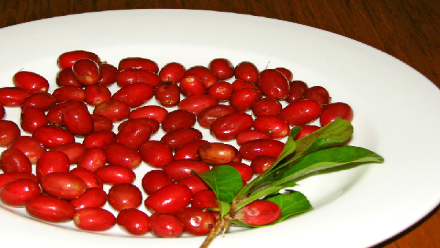 miracle-fruit 23 Weird Fruits Which You Probably Have Never Eaten Before, But Should