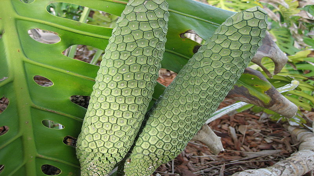 monstera-deliciosa 23 Weird Fruits Which You Probably Have Never Eaten Before, But Should