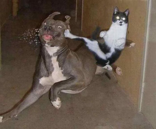 ninja1 19 Animals Making Funny Faces
