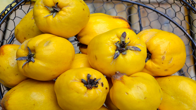 quince 23 Weird Fruits Which You Probably Have Never Eaten Before, But Should