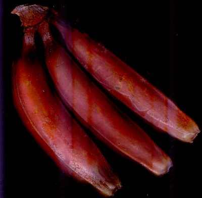 red-bananas Have You Ever Tried Eating Red Bananas?