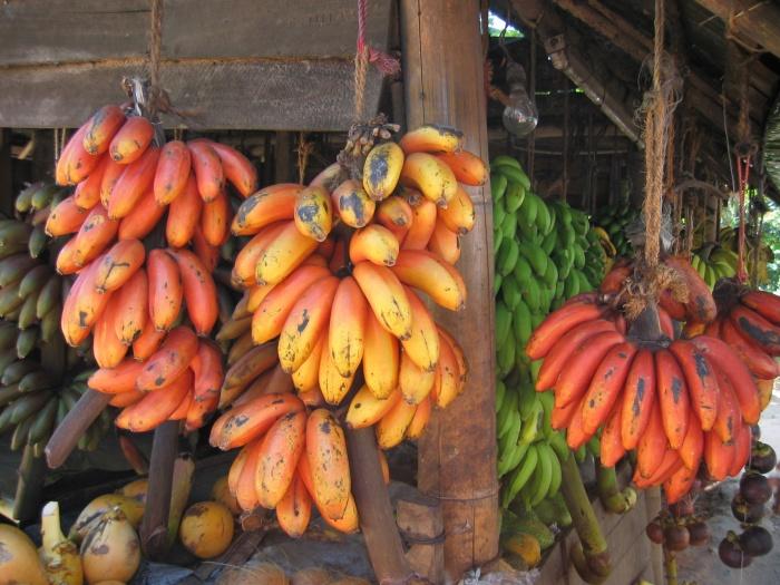 redbananassrilanka Have You Ever Tried Eating Red Bananas?