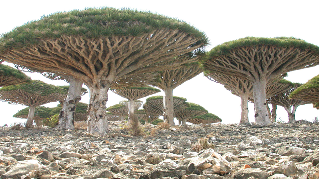 socotra Top 25 Places You Have To See Before You Die...