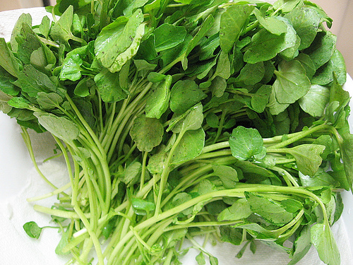 watercresschinese For Health Seekers, Watercress Has Bountiful Health Benefits