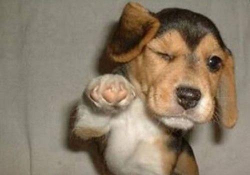 winkdog1 19 Animals Making Funny Faces