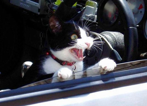 yelling1 19 Animals Making Funny Faces