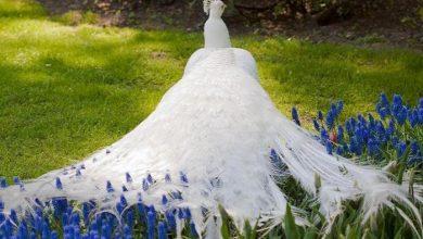 Photo of Weird Peacocks Wear Wedding Dresses