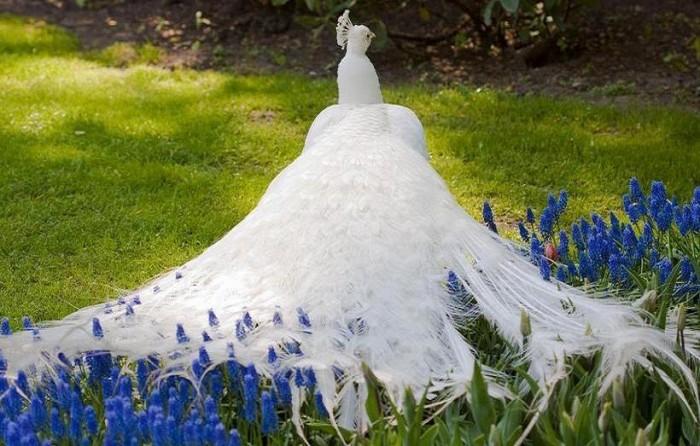 286094_db87868f7218b9af2e8cec50fda5cf33_large Weird Peacocks Wear Wedding Dresses