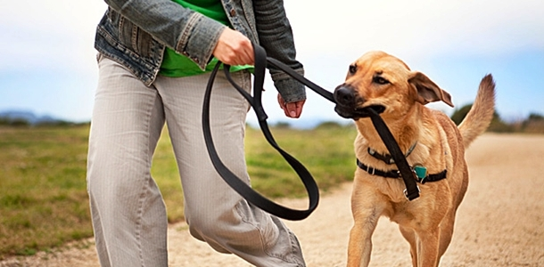 618_348_the-ideal-exercise-for-your-dog Help Your Pet Animal To Lose Weight