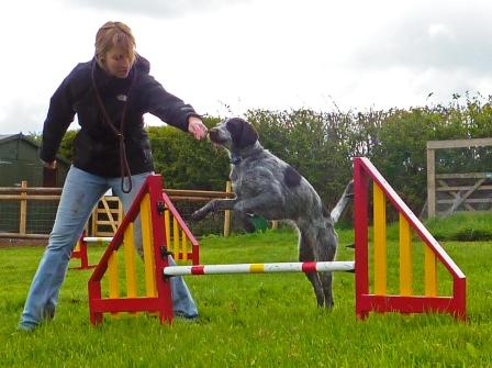 Agility_Hannahs_Dog Help Your Pet Animal To Lose Weight