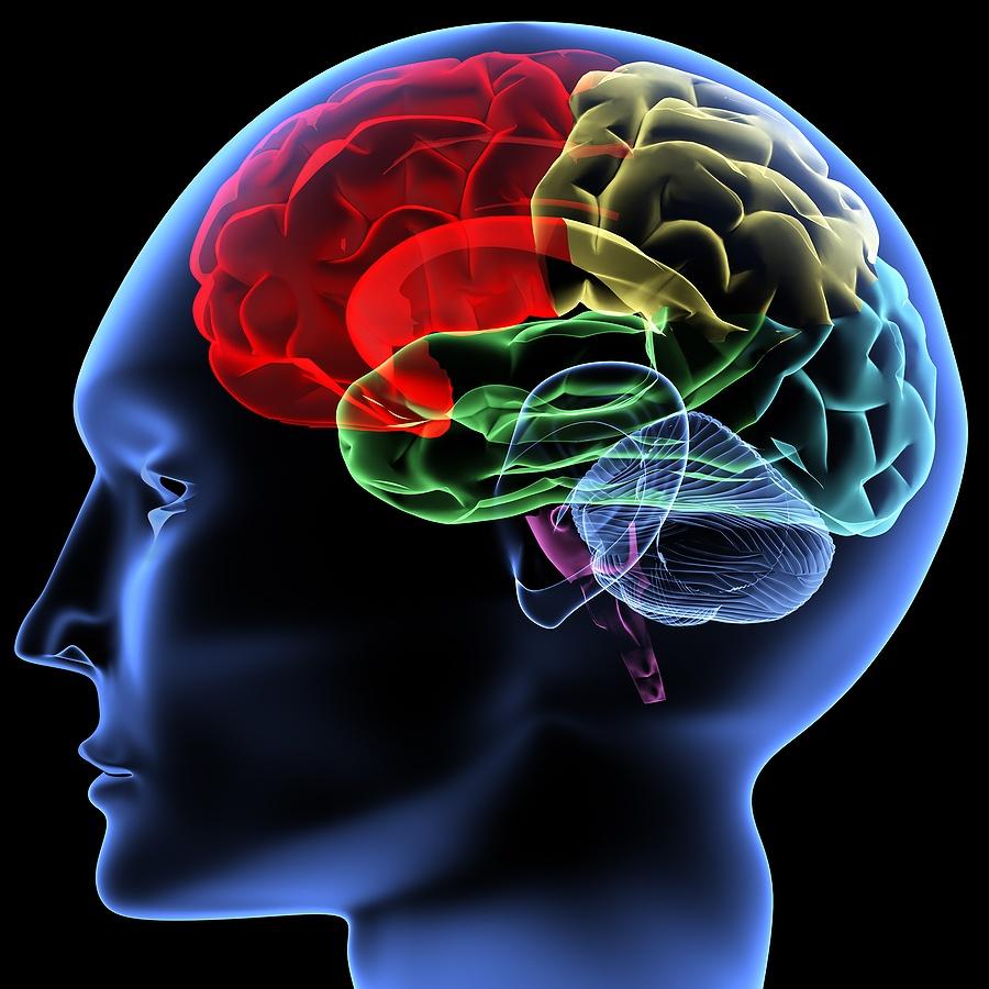 bigstock_Brain_2819169 Get Full Control of Your Brain's Potential