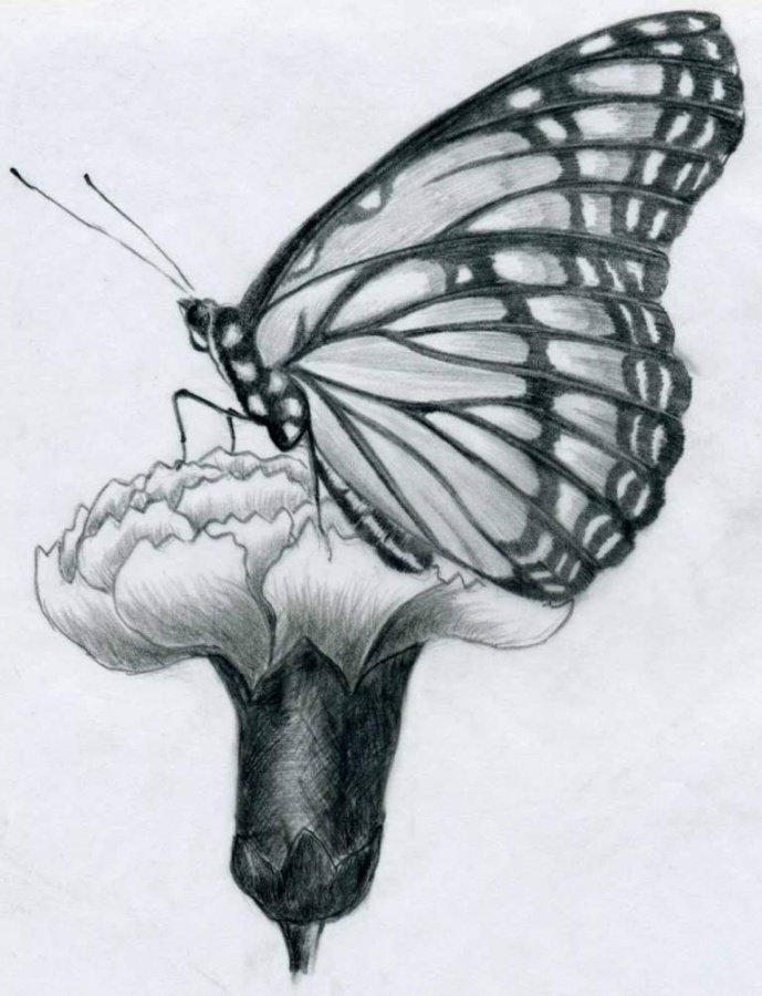 butterfly-pencil-drawings08 7 Criteria to Choose the Best Rubber Stopper Manufacturer