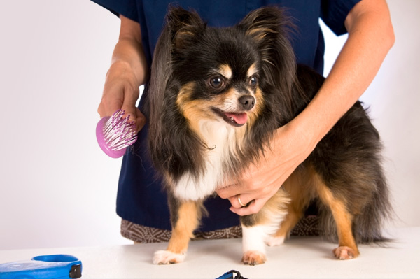 grooming-dog Find Out How To Be Nice To Your Pet