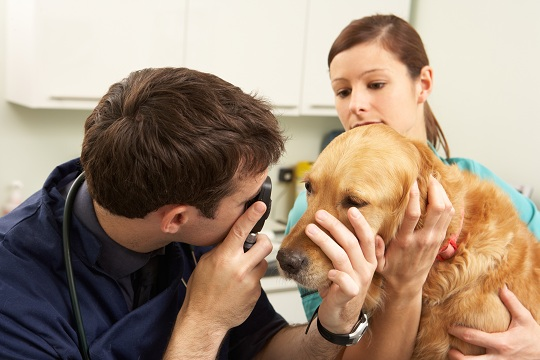 how-often-vet Help Your Pet Animal To Lose Weight