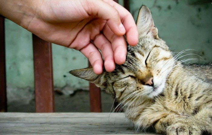 petting-my-cat-wallpaper 5 Tips Help Your Animals To Live Longer Lives