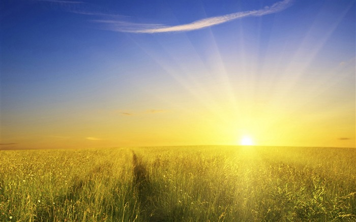 Photo_Morning_Glory_Sunrise_Over_Field_medium Basic Information And Facts About The Sun
