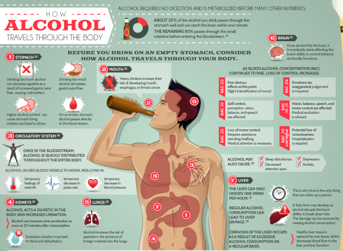1 The Effects of Alcohol on Your Body and Mind