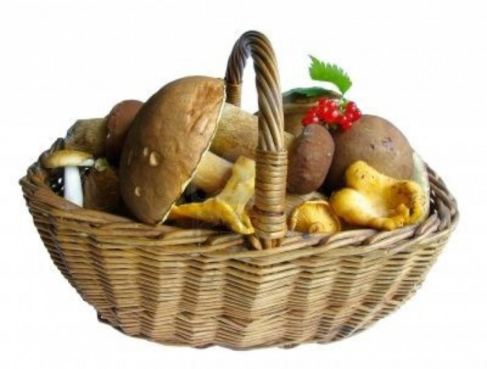 318882-basket-full-of-mushrooms-isolated-image 10 Types of Food to Provide You with Longevity & Good Health