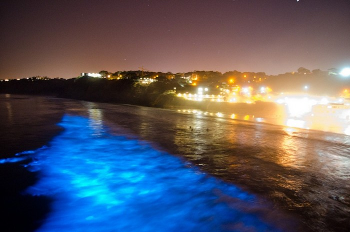 6205848883_3315ba6df5_z Magnificent and Breathtaking Blue Waves that Glow at Night
