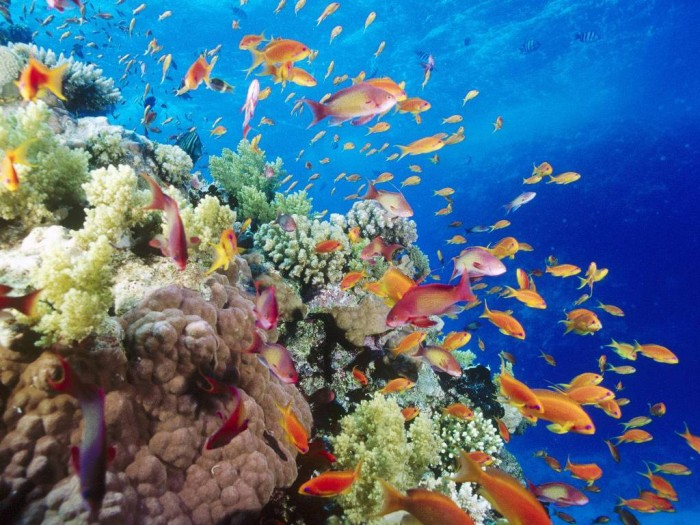Coral-Reef-Southern-Red-Sea-Near-Safaga-Egypt Adventure Travel Destinations to Enjoy an Unforgettable Holiday