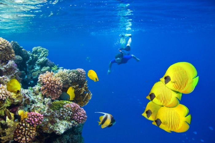 Female-Scuba-Diver-and-School-of-Tropical-Fish-on-Red-Sea-coral-reef Adventure Travel Destinations to Enjoy an Unforgettable Holiday