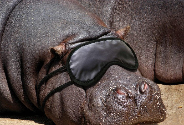Funny-animals-ads-al-ain-desert-wildlife-park-sleeping-hippo Easy to Follow Tricks & Secrets for Taking Better Digital Photographs