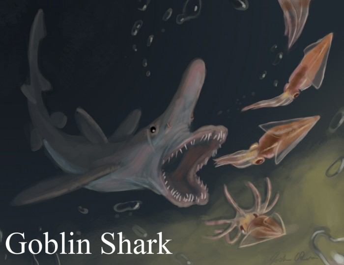 Goblin-Shark Have You Ever Seen Such a Scary & Goblin Shark with Two Faces?
