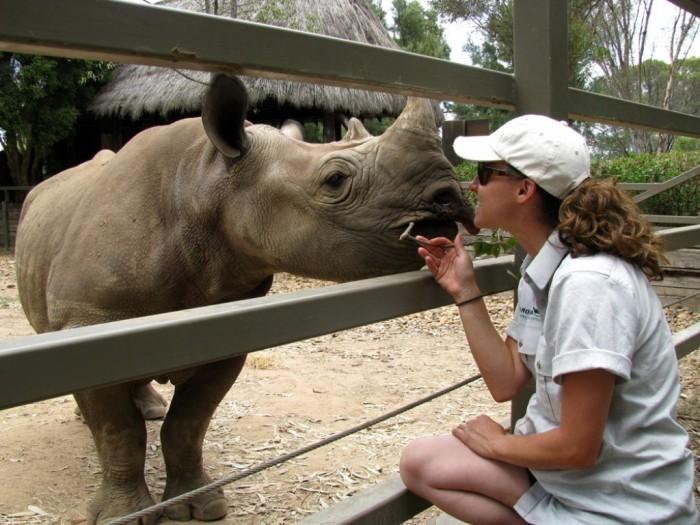 IMG_0739 The Western Black Rhinoceros Declared Extinct Because of Heavy Poaching