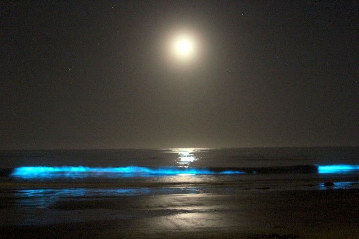 IMG_5006 Magnificent and Breathtaking Blue Waves that Glow at Night