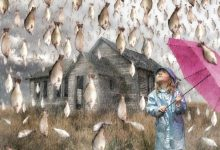 Photo of Believe It or Not! It Is Raining Fish in Honduras Instead of Water Drops